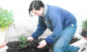 Jardinage_à_Niort